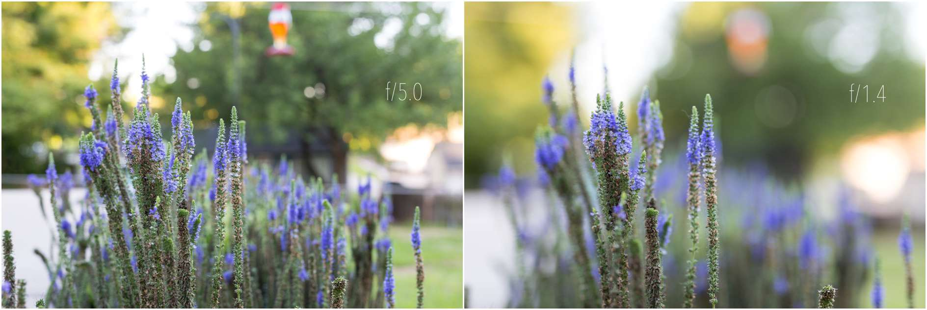 Image result for shallow depth of field vs deep