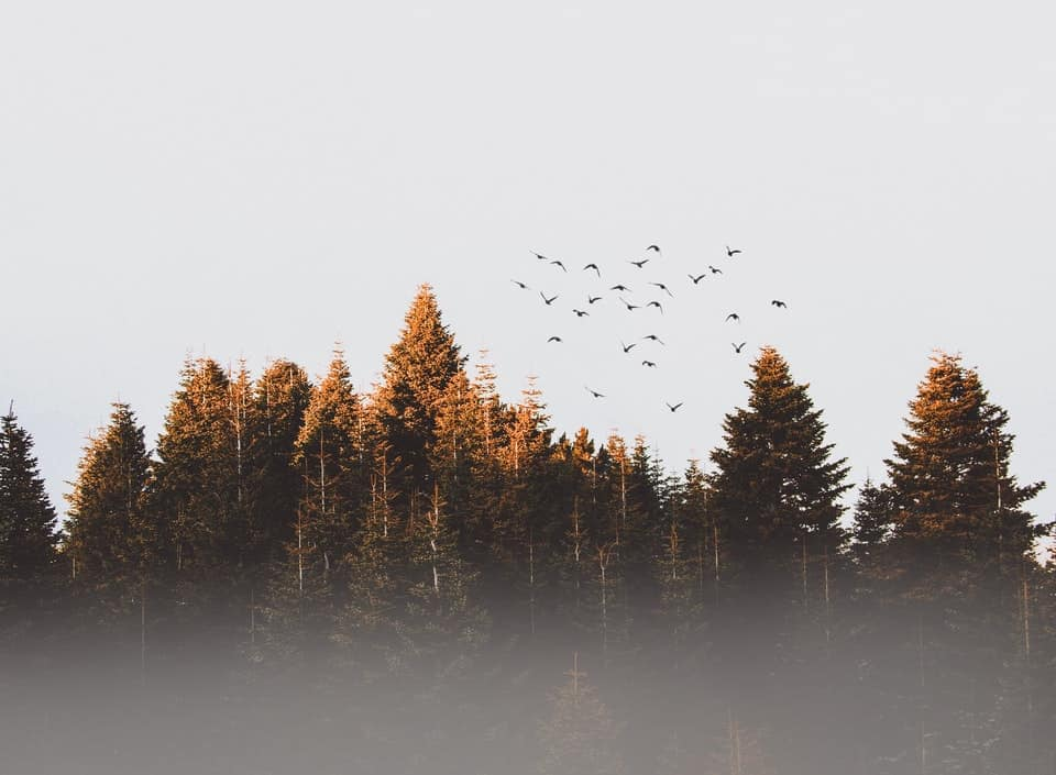 forest with birds flying above