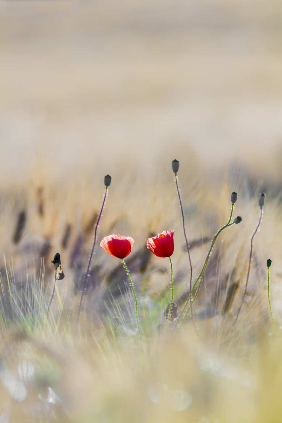 two red flowers in field